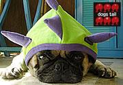 Dogs Tail: Mr. Mametarou